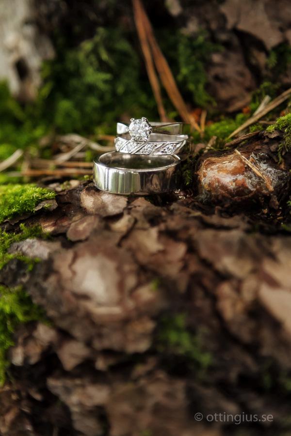 Vigselringar i silver fotograferade med skogen som bakgrund