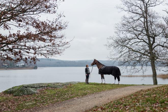 Hästporträtt