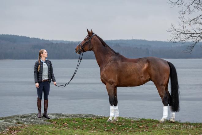 hästbilder med ryttare